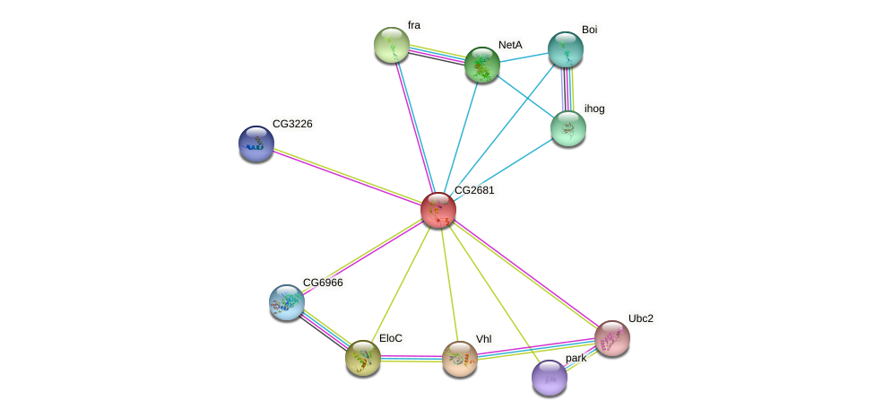 CG2681 protein (fruit fly) - STRING interaction network
