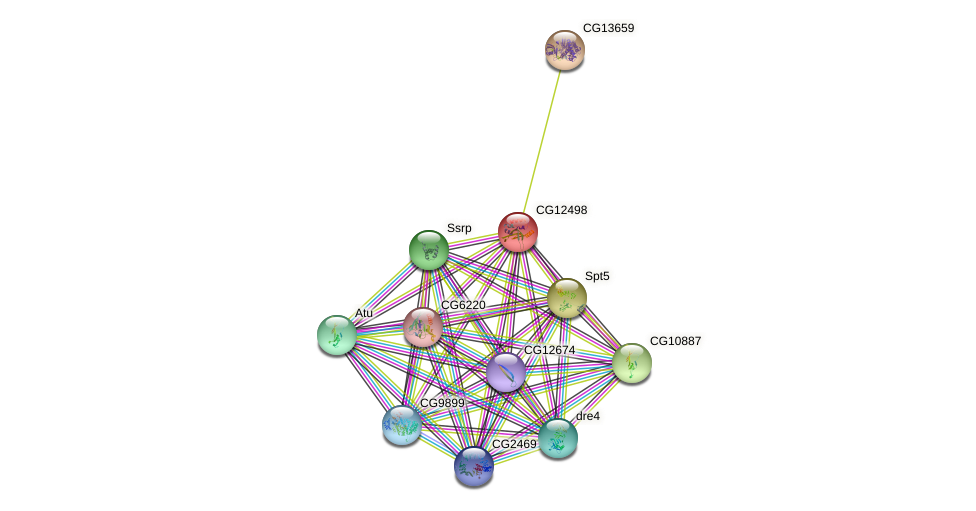 CG12498 protein (fruit fly) - STRING interaction network