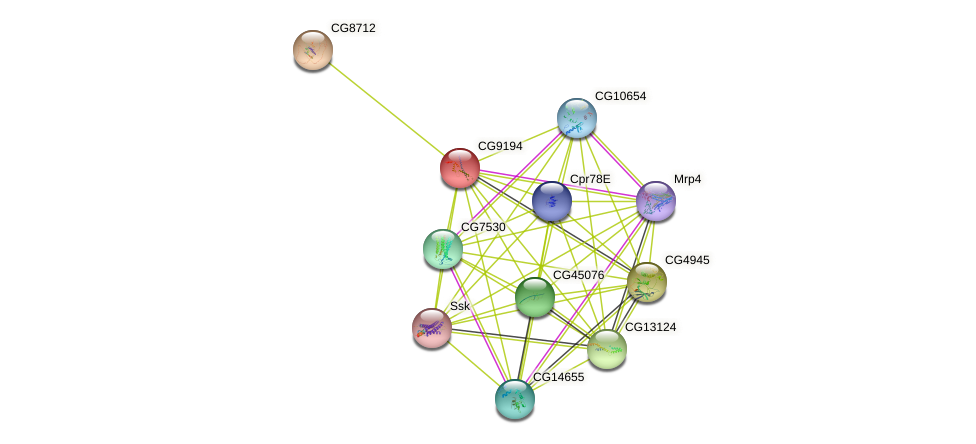 CG9194 protein (fruit fly) - STRING interaction network