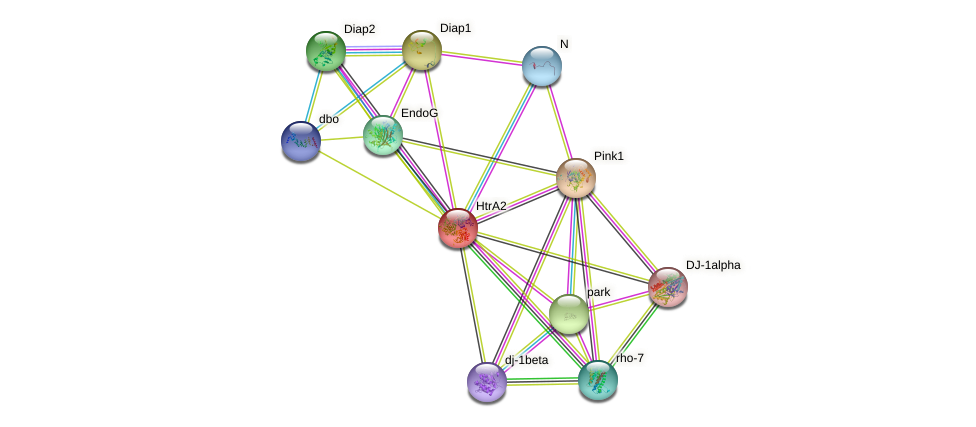 HtrA2 protein (fruit fly) - STRING interaction network