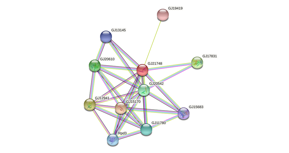 GJ21748 protein (Drosophila virilis) - STRING interaction network