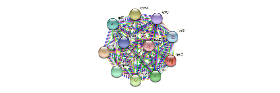 rpsO protein (Pasteurella multocida) - STRING interaction network