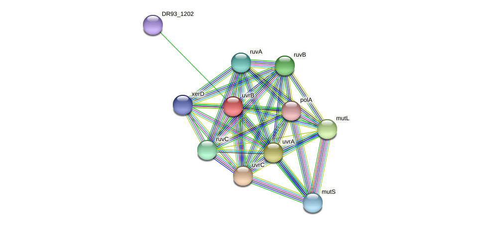 uvrB protein (Pasteurella multocida) - STRING interaction network