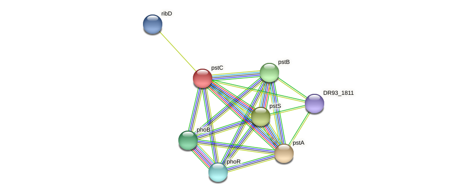 pstC protein (Pasteurella multocida) - STRING interaction network