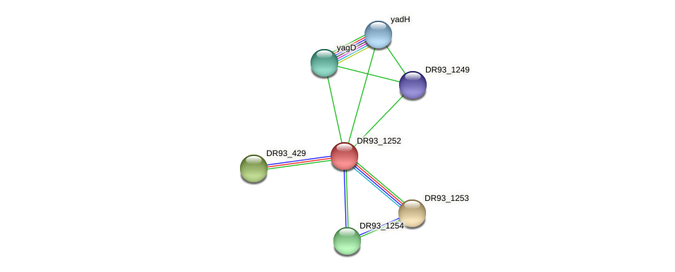 DR93_1252 protein (Pasteurella multocida) - STRING interaction network