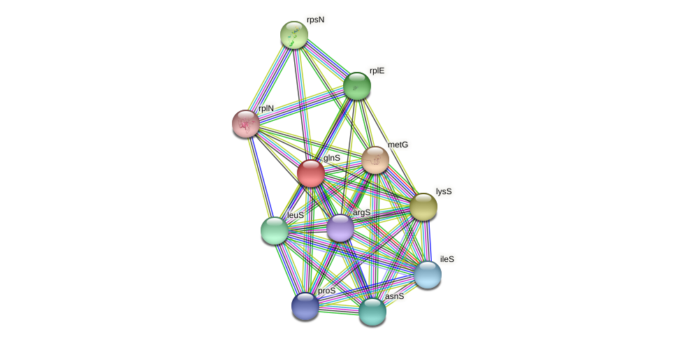 glnS protein (Pasteurella multocida) - STRING interaction network