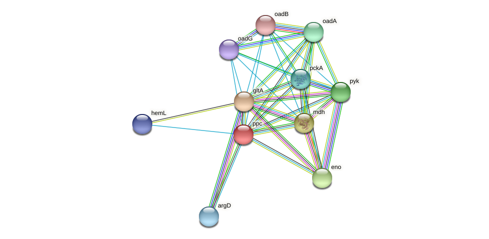 DR93_1323 protein (Pasteurella multocida) - STRING interaction network