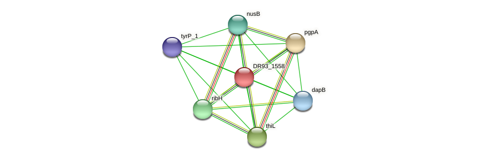 DR93_1558 protein (Pasteurella multocida) - STRING interaction network