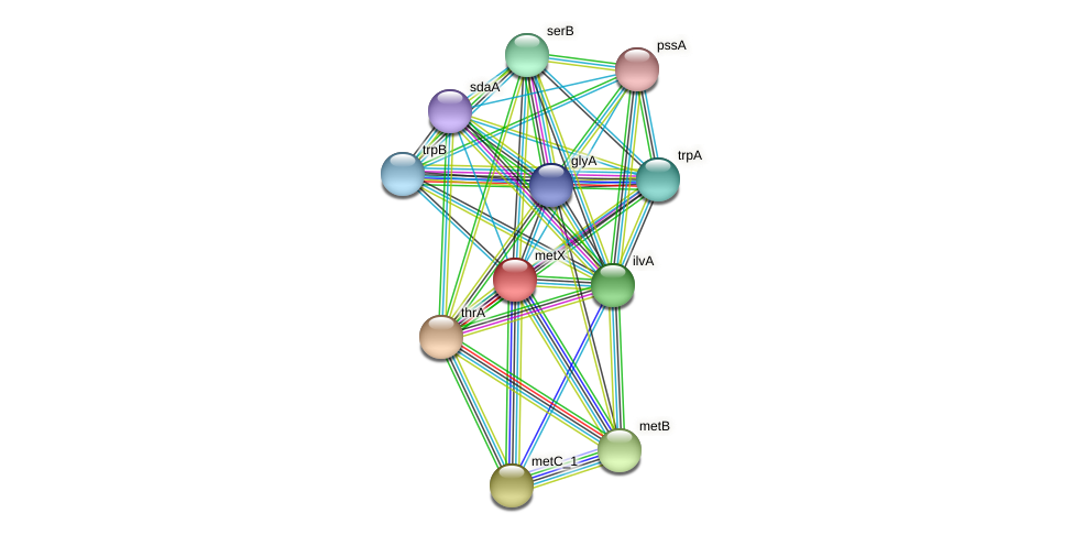 metX protein (Pasteurella multocida) - STRING interaction network
