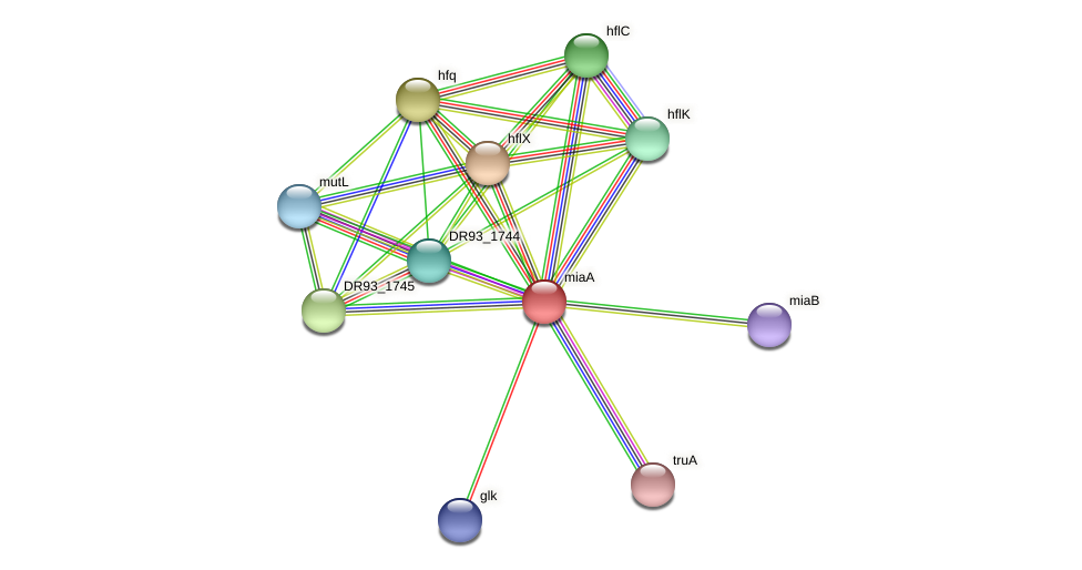 miaA protein (Pasteurella multocida) - STRING interaction network
