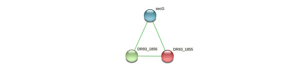 DR93_1855 protein (Pasteurella multocida) - STRING interaction network