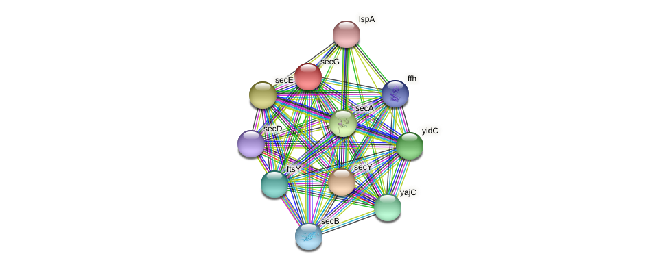 secG protein (Pasteurella multocida) - STRING interaction network