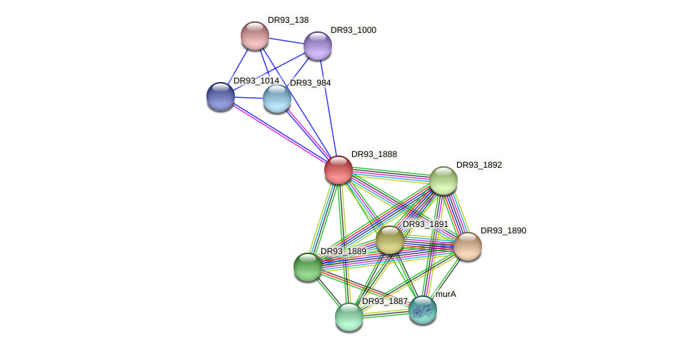 DR93_1888 protein (Pasteurella multocida) - STRING interaction network