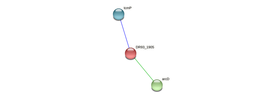 DR93_1905 protein (Pasteurella multocida) - STRING interaction network