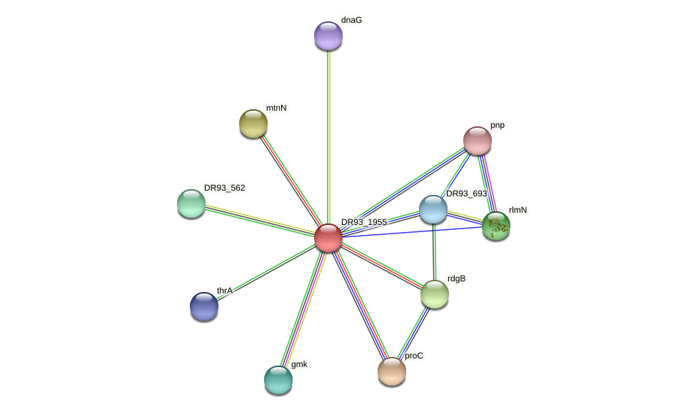 DR93_1955 protein (Pasteurella multocida) - STRING interaction network