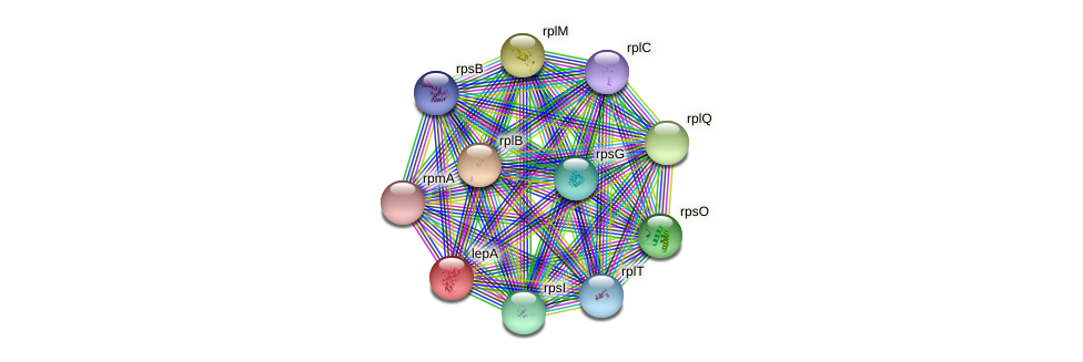 lepA protein (Pasteurella multocida) - STRING interaction network