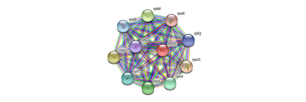 rpsS protein (Pasteurella multocida) - STRING interaction network