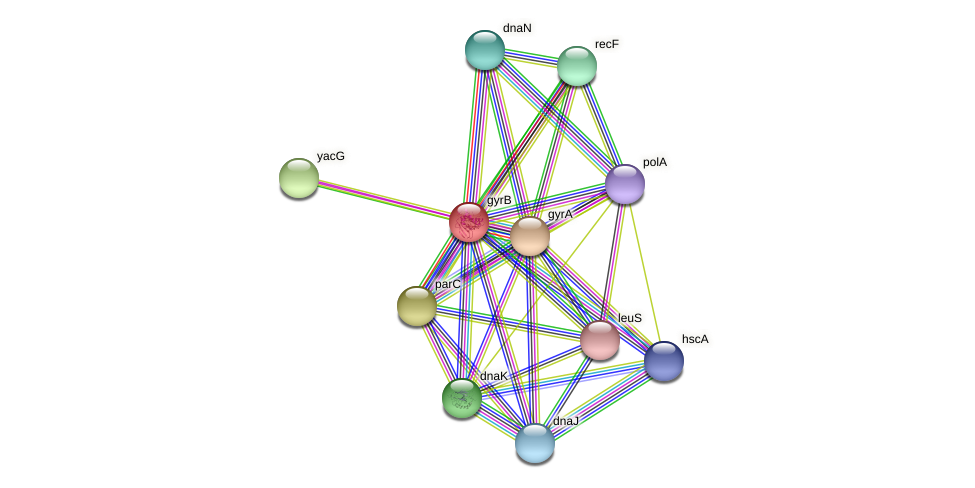gyrB protein (Pasteurella multocida) - STRING interaction network