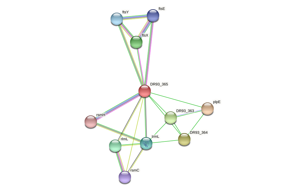 DR93_365 protein (Pasteurella multocida) - STRING interaction network