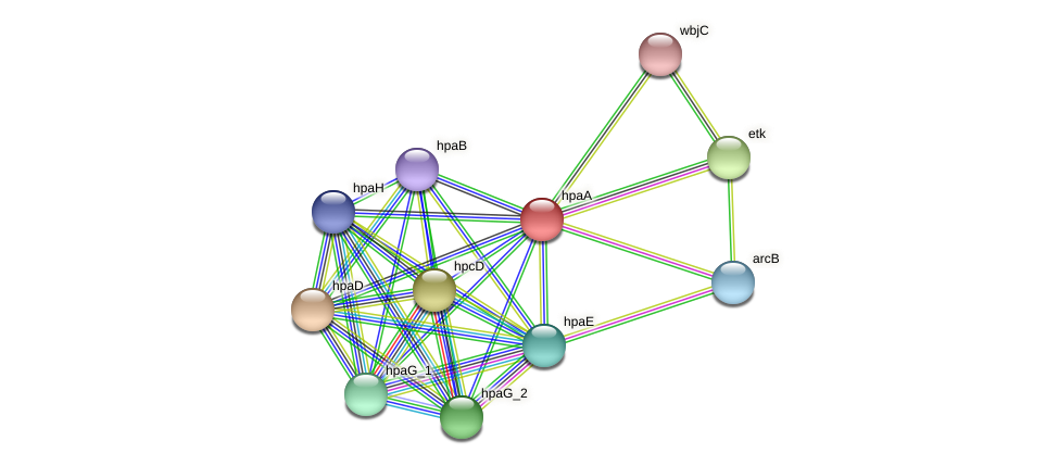 hpaA protein (Pasteurella multocida) - STRING interaction network