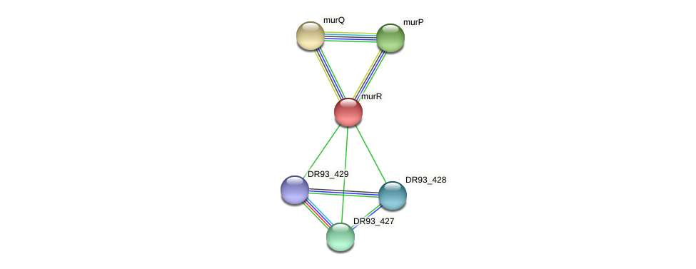 murR protein (Pasteurella multocida) - STRING interaction network