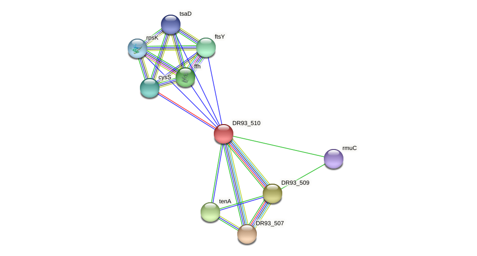 DR93_510 protein (Pasteurella multocida) - STRING interaction network