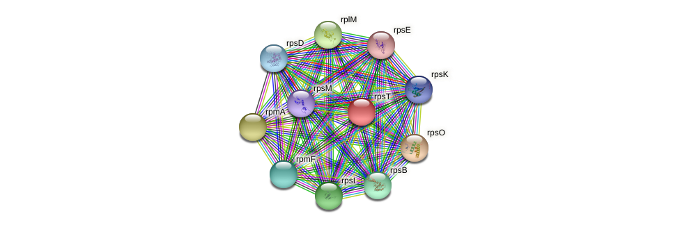 rpsT protein (Pasteurella multocida) - STRING interaction network