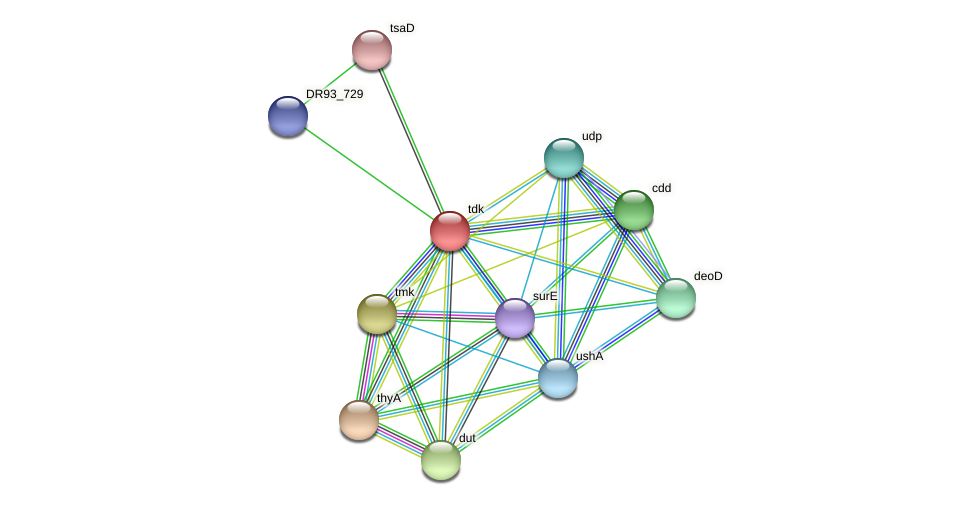 DR93_730 protein (Pasteurella multocida) - STRING interaction network