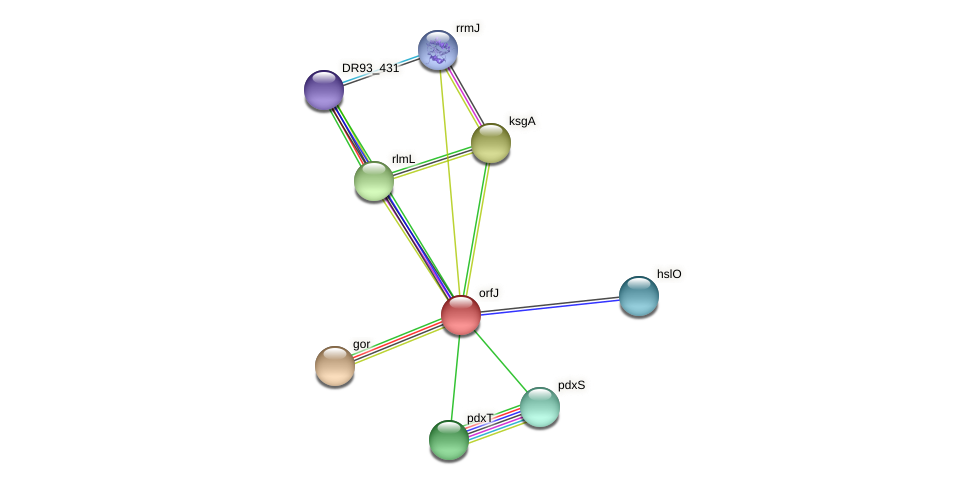 DR93_732 protein (Pasteurella multocida) - STRING interaction network