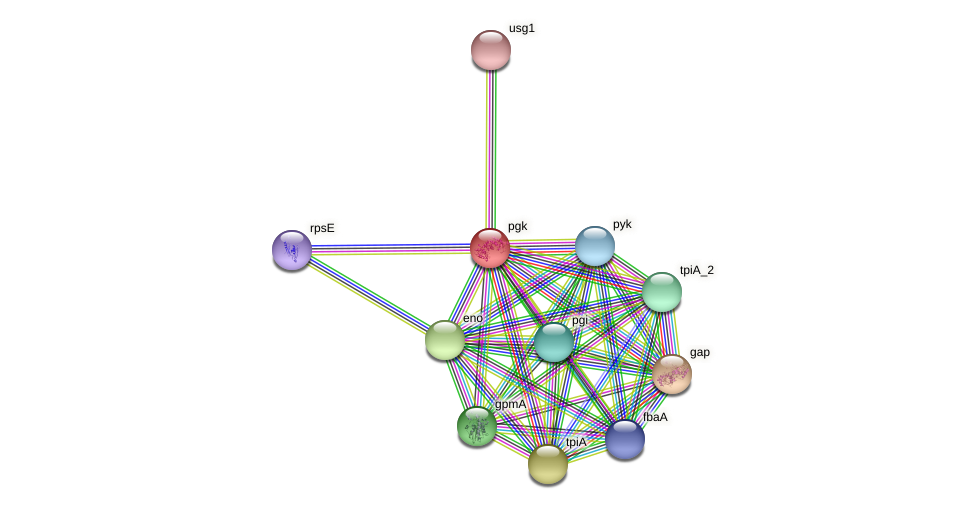 pgk protein (Pasteurella multocida) - STRING interaction network