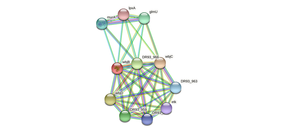 DR93_962 protein (Pasteurella multocida) - STRING interaction network