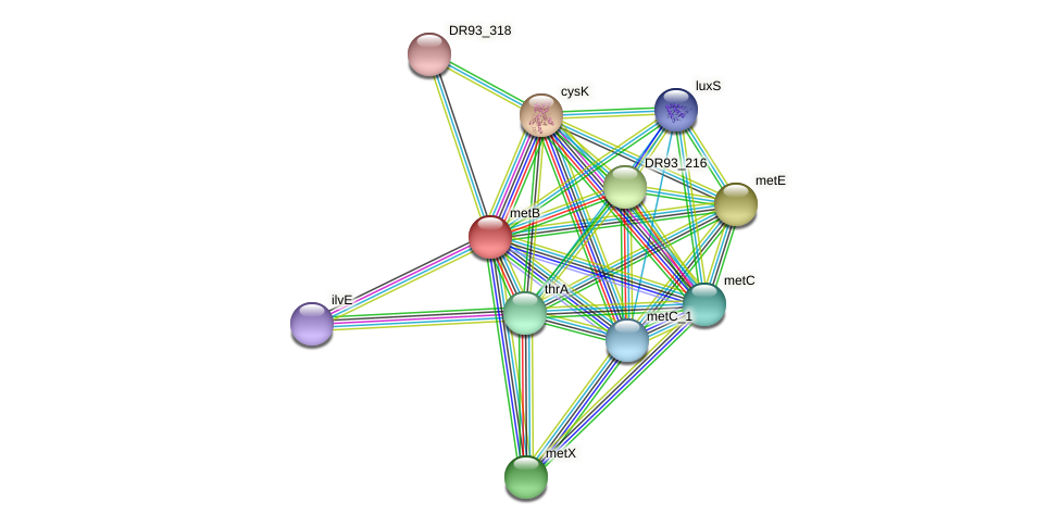 metB protein (Pasteurella multocida) - STRING interaction network