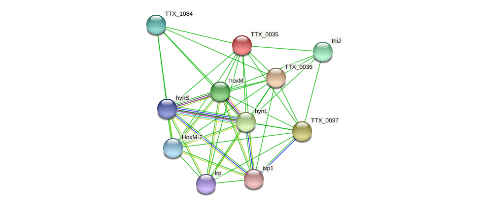 TTX_0035 protein (Thermoproteus tenax) - STRING interaction network