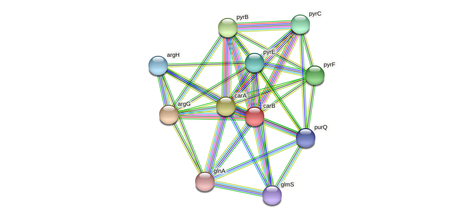 carB protein (Thermoproteus tenax) - STRING interaction network
