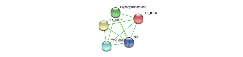 TTX_0056 protein (Thermoproteus tenax) - STRING interaction network