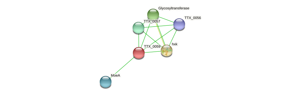 TTX_0059 protein (Thermoproteus tenax) - STRING interaction network