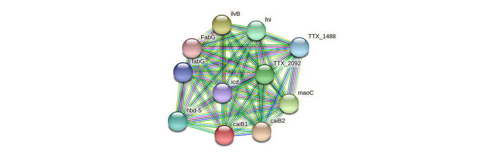caiB1 protein (Thermoproteus tenax) - STRING interaction network
