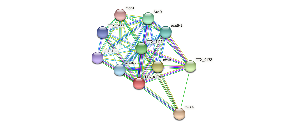 TTX_0174 protein (Thermoproteus tenax) - STRING interaction network