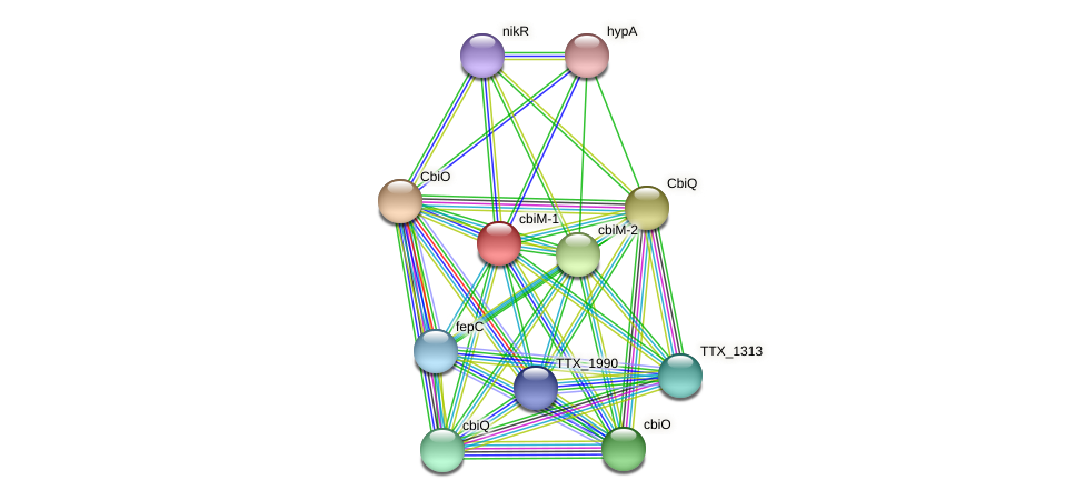 cbiM-1 protein (Thermoproteus tenax) - STRING interaction network