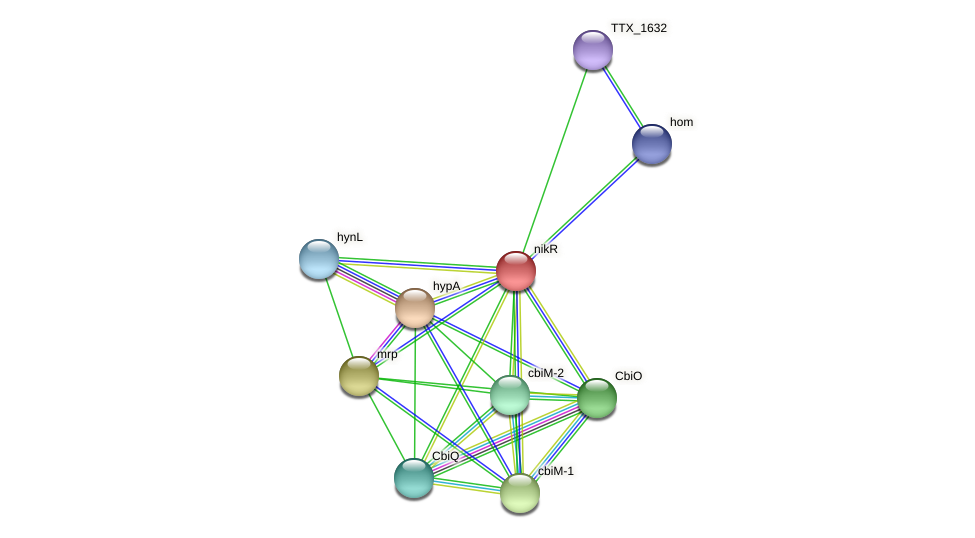 TTX_0198 protein (Thermoproteus tenax) - STRING interaction network