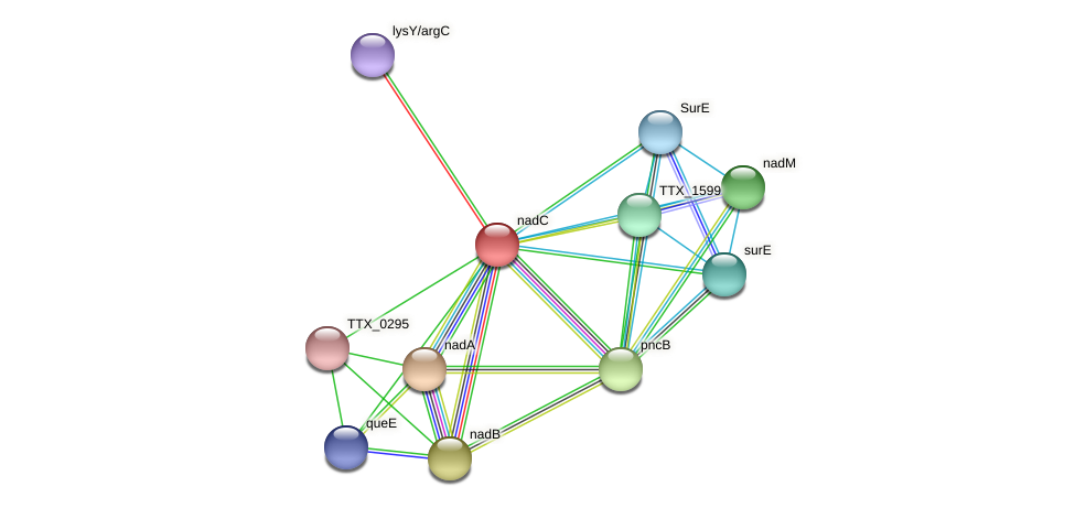 nadC protein (Thermoproteus tenax) - STRING interaction network