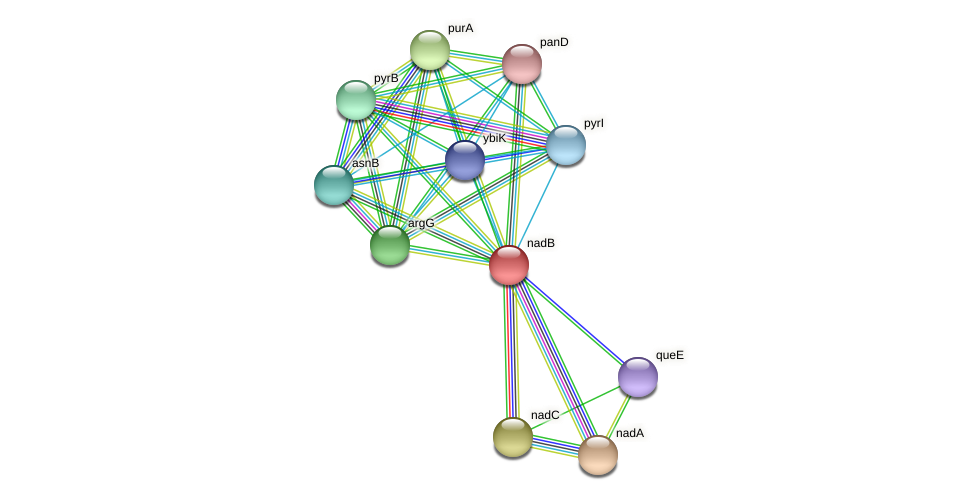 nadB protein (Thermoproteus tenax) - STRING interaction network