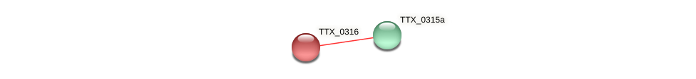 TTX_0316 protein (Thermoproteus tenax) - STRING interaction network
