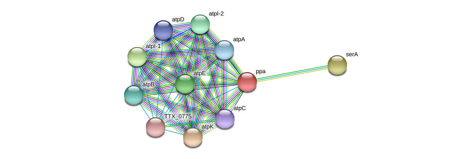 TTX_0388 protein (Thermoproteus tenax) - STRING interaction network
