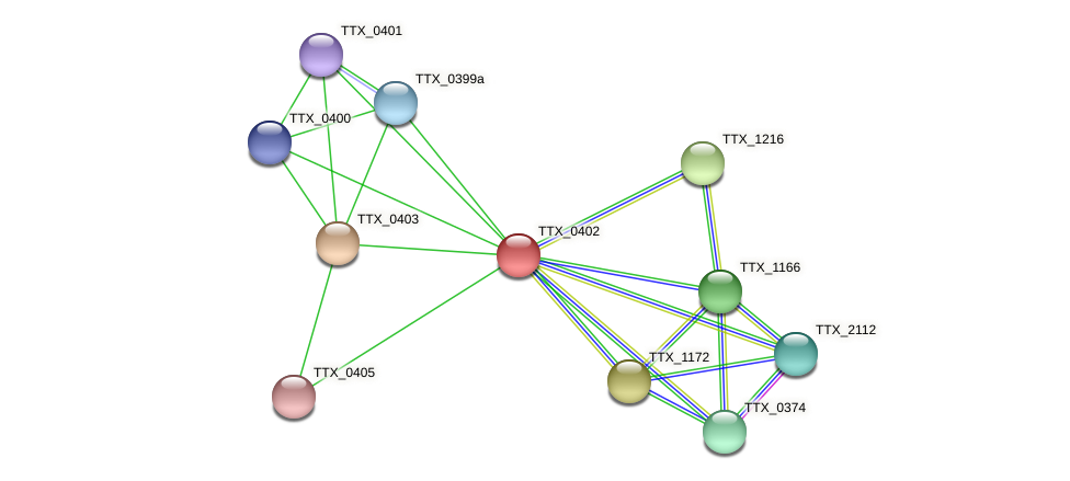 TTX_0402 protein (Thermoproteus tenax) - STRING interaction network