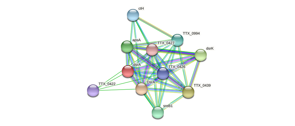 TTX_0423 protein (Thermoproteus tenax) - STRING interaction network
