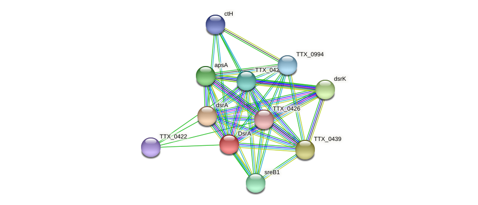 TTX_0424 protein (Thermoproteus tenax) - STRING interaction network