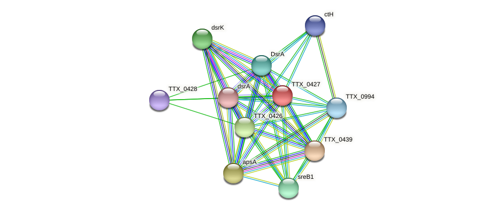 TTX_0427 protein (Thermoproteus tenax) - STRING interaction network