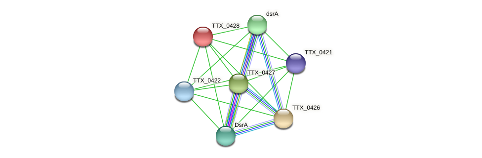 TTX_0428 protein (Thermoproteus tenax) - STRING interaction network