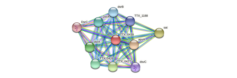 TTX_0439 protein (Thermoproteus tenax) - STRING interaction network